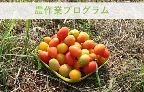 自然の中で自分らしさを見つける –農作業プログラム–