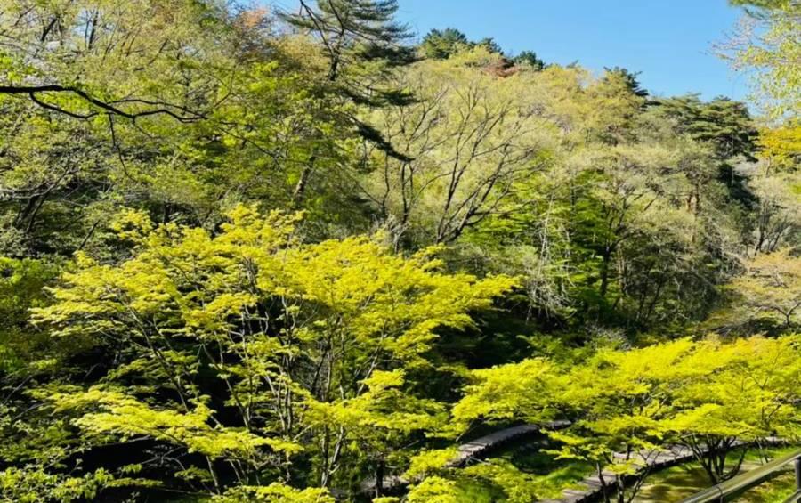 森林浴とは?森林浴に期待される実証効果やうつ病との関係性について